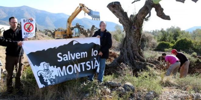 Moció del PCPC d'Amposta contra l'espoli de les oliveres mil·lenàries